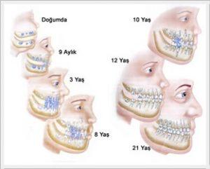 ağız ve dişlerin yapısı ömer bayar